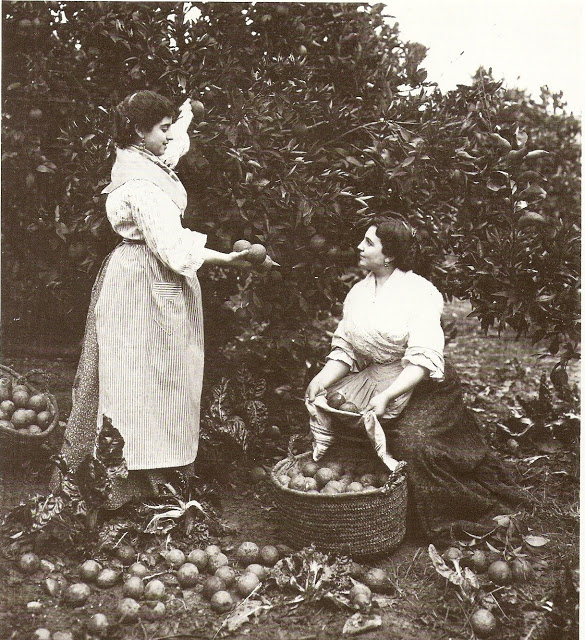 recoleccion-antigua-de-las-naranjas