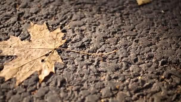 nina peña - poemas - sombras - hojas
