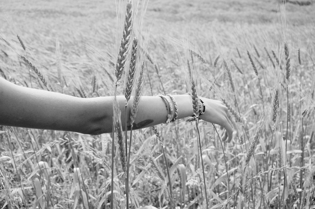 otoño - brazo - campo - trigo